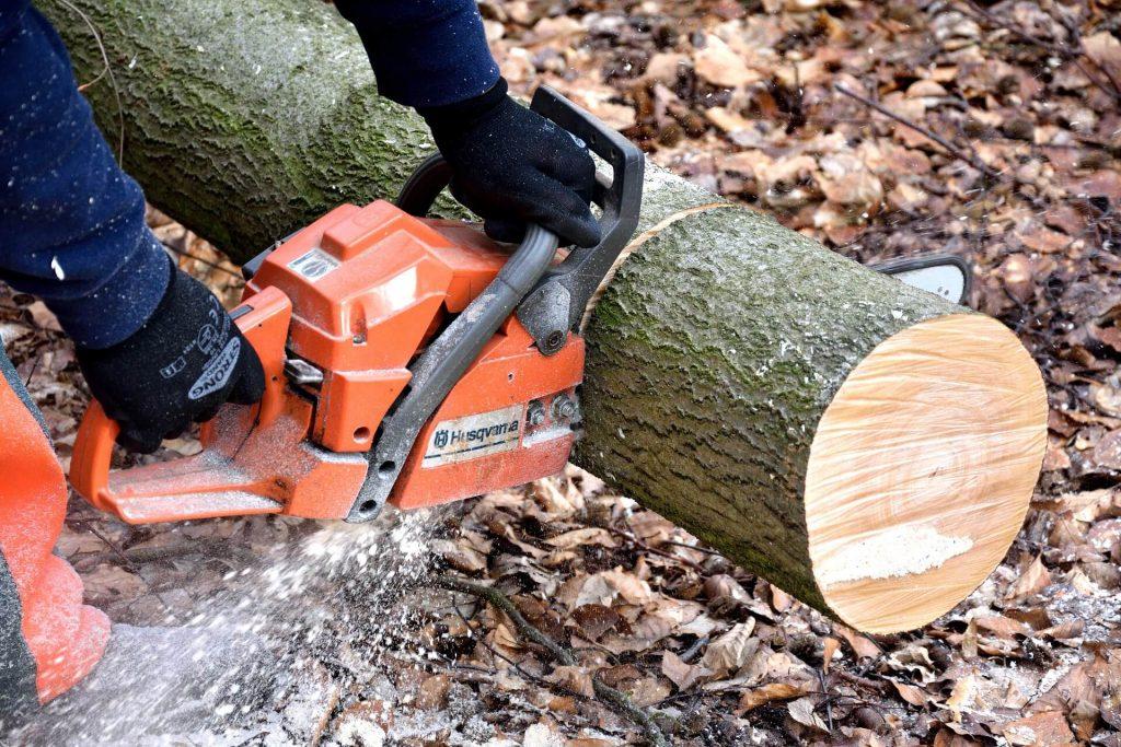 Brennholz aus dem Wald – Die besten Hinweise